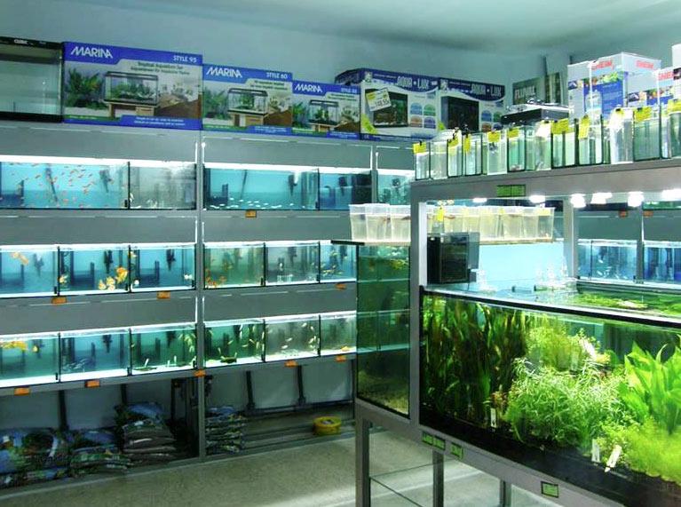 Aqualoto, todo para el acuario, interior de la tienda