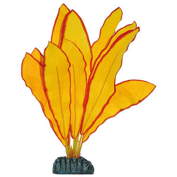 Echinodorus amarilla