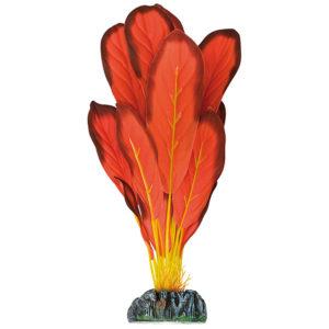 Echinodorus roja