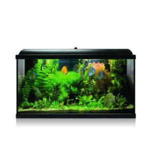 kit acuario tropical