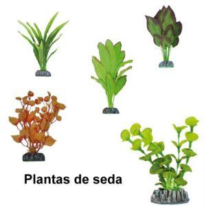 Plantas seda