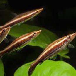 peces lapices