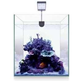 Acuario nano marino
