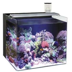 Nano acuarios marinos