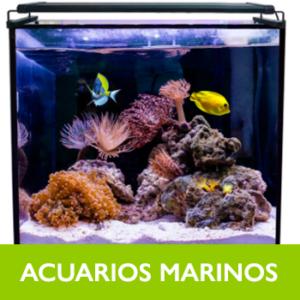 Acuarios Marinos