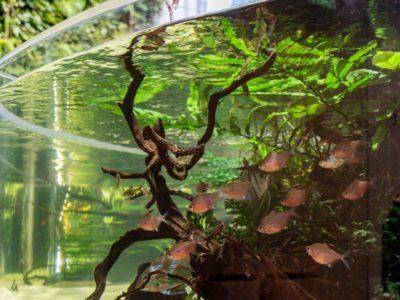 Ciclado del agua para acuarios