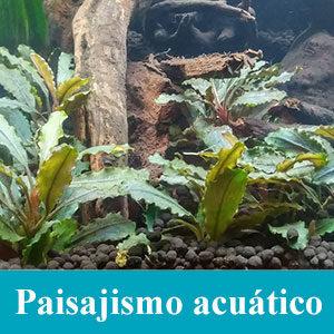 Paisajismo acuático