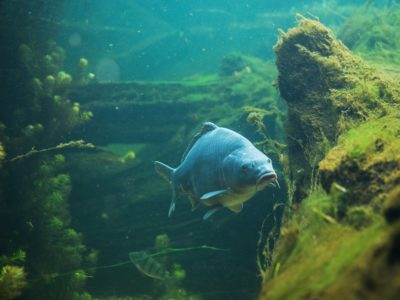 ¿Cómo funciona un filtro de acuario?